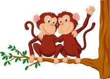 Due scimmie che si siedono su un albero Immagini Stock Libere da Diritti