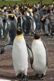 Due soggiorni dei pinguini di re Fotografia Stock Libera da Diritti