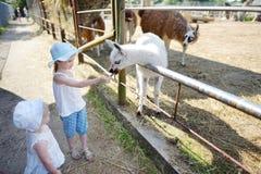 Due sorelline che alimentano un lama del bambino Immagini Stock