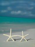 Due starfishs sulla spiaggia Fotografia Stock Libera da Diritti
