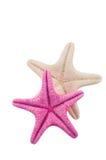 Due stelle marine su bianco Fotografie Stock