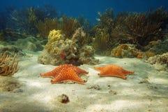 Due stelle marine subacquee con i coralli Fotografie Stock