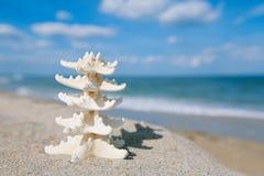 Due stelle marine sull'oceano del mare tirano in Florida, l'alba delicata morbida Immagine Stock