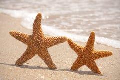 Due stelle marine sulla spiaggia Fotografia Stock Libera da Diritti