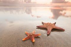 Due stelle marine sulla spiaggia del mare al tramonto immagine stock libera da diritti