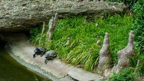 Due tartarughe in Koi Pond giapponese Immagine Stock Libera da Diritti