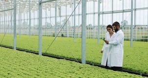Due tecnici di laboratorio che effettuano ricerca che sta nella serra di agro compressa di tenuta Esaminano lo stato delle piante stock footage