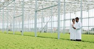 Due tecnici di laboratorio che effettuano ricerca che sta nella serra di agro compressa di tenuta Esaminano lo stato delle piante video d archivio