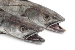 Due teste dei pesci del nasello Fotografia Stock