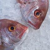 Due teste dei pesci dell'abramide del Mar Rosso nel ghiaccio Immagini Stock
