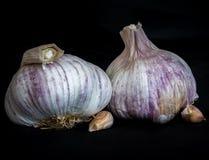 Due teste dell'aglio Immagine Stock