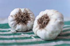 Due teste di aglio Immagine Stock Libera da Diritti