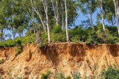 Open trees roots due to landslides stock image