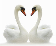 Due uccelli. Fotografia Stock