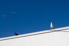 Due uccelli Fotografia Stock