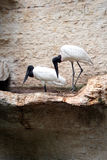 Due uccelli Fotografia Stock Libera da Diritti