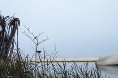 Due uccelli che si siedono su un ramo asciutto alla baia - abbastanza spettrale Fotografie Stock