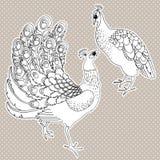 Due uccelli esotici su bianco Immagini Stock Libere da Diritti
