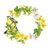 Due uccelli, fiori, erba Corona floreale Confine del cerchio dell'acquerello Fotografia Stock Libera da Diritti