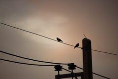 Due uccelli soli Fotografia Stock Libera da Diritti