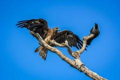 Due uccelli su un albero Fotografia Stock