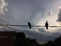 Due uccelli su un cavo o su una linea elettrica fotografie stock libere da diritti