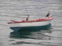 Due uccelli su una barca fotografie stock libere da diritti