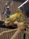 Due uccellini Fotografia Stock Libera da Diritti
