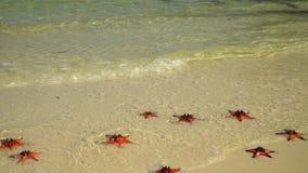 Due un colpo in video Bello giorno soleggiato Sabbia bianca tropicale con le stelle marine rosse in chiara acqua il primo piano s archivi video