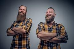 Due uomini barbuti divertenti si sono vestiti in una camicia di plaid che posa sulle sedere grige Immagini Stock Libere da Diritti