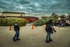 Due uomini Carry Fresh Evergreen fotografie stock libere da diritti