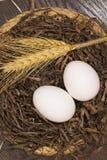 Due uova bianche e grani in un nido Fotografia Stock Libera da Diritti