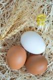 Due uova gialle ed un uovo bianco, grano e fiori gialli Immagini Stock Libere da Diritti
