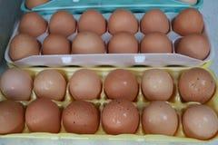 Due uova marroni dozzina Fotografia Stock Libera da Diritti