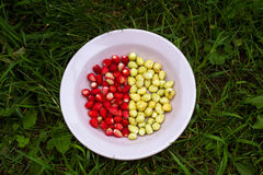 Due varietà di fragole su un piatto Fotografia Stock Libera da Diritti