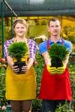 Due vasi con un albero verde nelle mani dei lavoratori fotografie stock libere da diritti