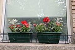 Due vasi da fiori verdi con i fiori sul davanzale della finestra vicino alla finestra Fotografia Stock Libera da Diritti