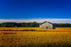 Due vecchi granai su Autumn Field Immagini Stock Libere da Diritti