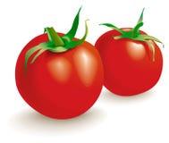 Due verdure dei pomodori. Vettore Immagini Stock Libere da Diritti