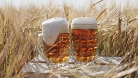 Due vetri della birra fredda sta su una scatola di legno nel campo stock footage