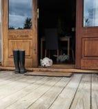 Due westies annoiati dentro una fattoria, mettente sul pavimento da una d Fotografia Stock
