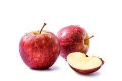 Due wi rossi di malus domestica, di malus pumila o di pyrus malus delle mele Fotografia Stock