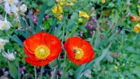 Due wildflowers Fiori crescenti frantumati video d archivio