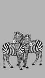 due zebre abbraccianti su fondo grigio Fotografie Stock