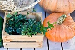 Due zucche arancio e una scatola di legno dell'edera fotografie stock