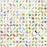 duecento e dieci elementi delle piante illustrazione vettoriale