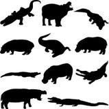 Duelo da besta: Hipopótamos e crocodilos Imagens de Stock Royalty Free
