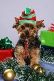 Duende del perrito Imágenes de archivo libres de regalías