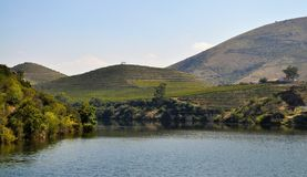 Duero-Fluss und die Weinberge stockbilder
