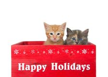 Duet of christmas kittens isolated on white. Two kittens in a red wooden box with Happy Holidays printed in white across the front. Orange ginger tabby and a royalty free stock photography
